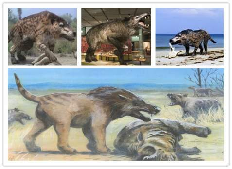 pictures of Andrewsarchus