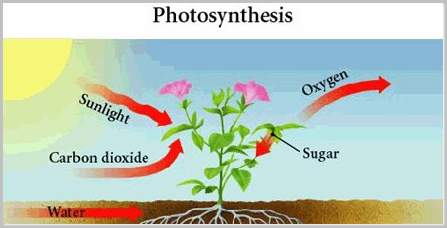 Why is photosynthesis important to the survival of all organisms in an ecosystem?Explain in detail.