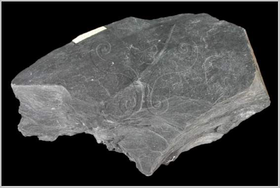 The Metamorphic Rock Phyllite Actforlibraries Org
